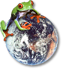 treefrog sitting on the world